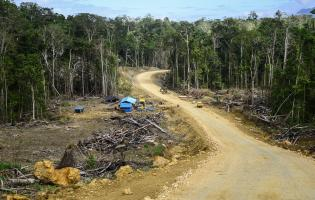 Déforestation liée à la construction d'une route en Papouasie occidentale